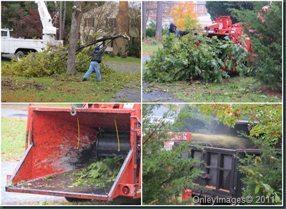 tree removal3