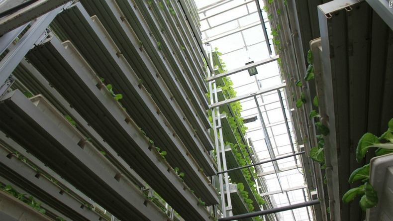 skygreens-vertical-farm-9