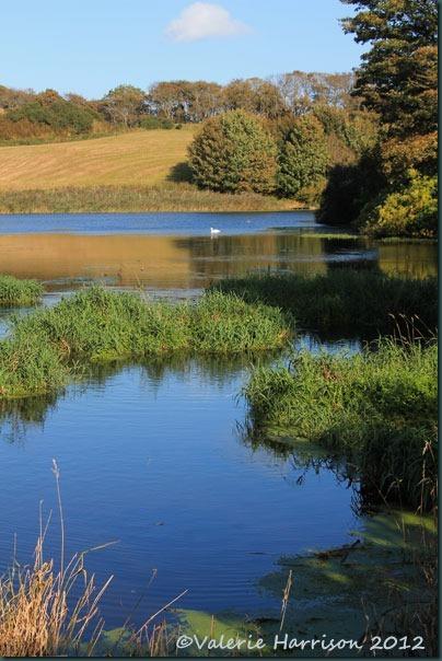 32-ardwell-pond