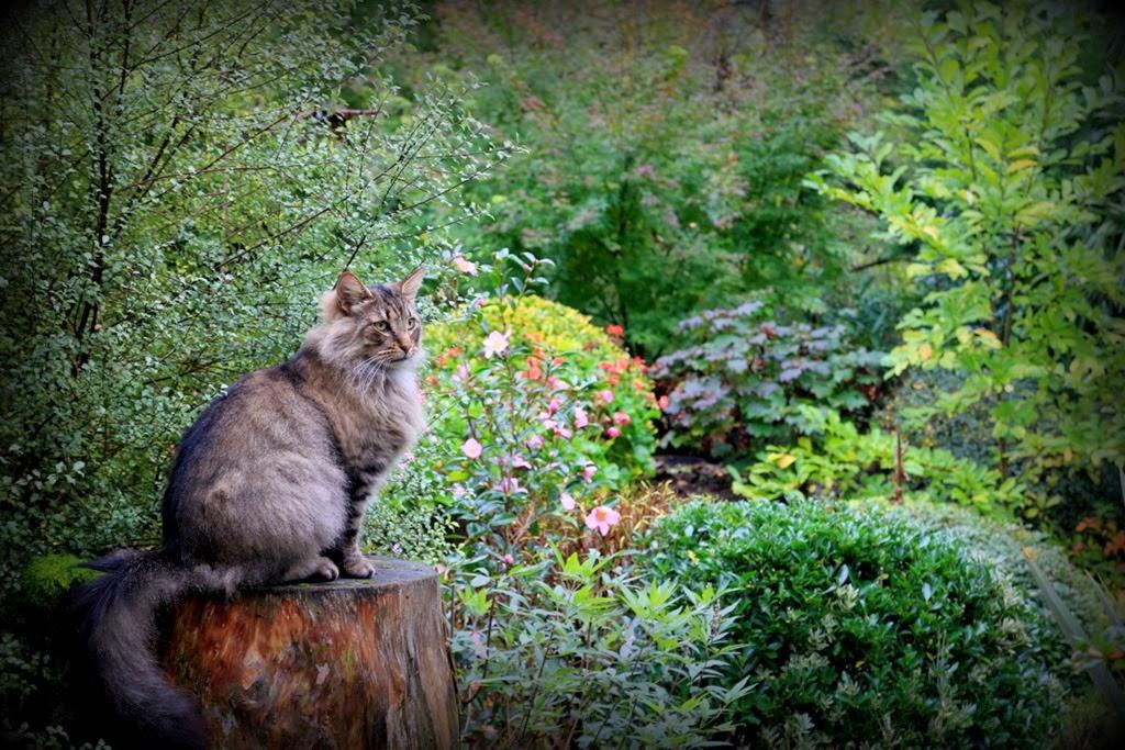 L 39 automne 6 jardin de nadya for Le jardin des 4 saisons albi