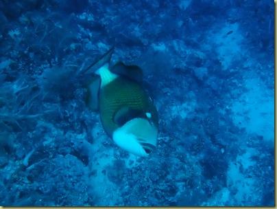 LBS Fish Titan