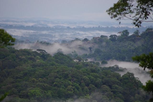 La forêt embrumée après la pluie, piste de Coralie, 2 novembre 2012. Photo : J.-M. Gayman