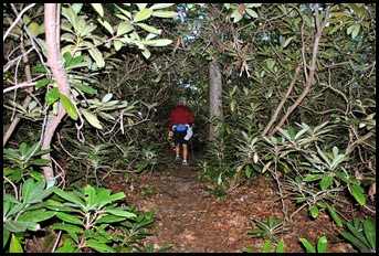 14 - Rock Garden Trail - Deeper in it reminds us of the Mangroves in South Florida
