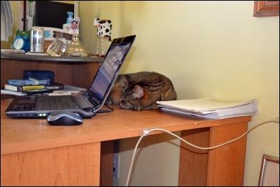 Martin on the desk