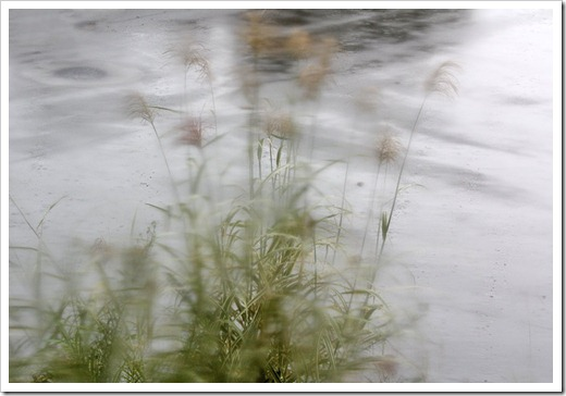 111006_rain_dixieland