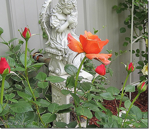 Rose_EasyDoes_It_Floribunda2