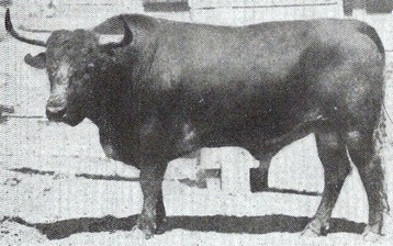 Toro vazqueño (Concha y Sierra) 001