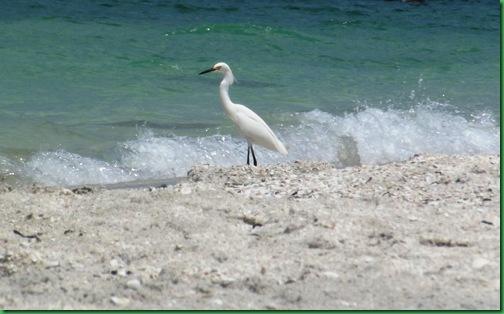 Friday Nokomis Beach (160)A