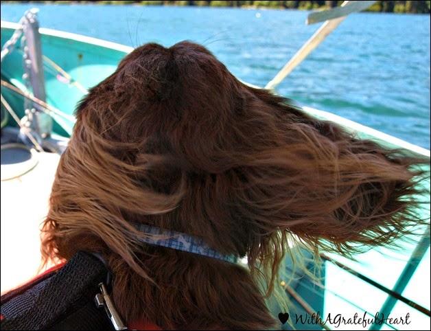 Joey in the Wind
