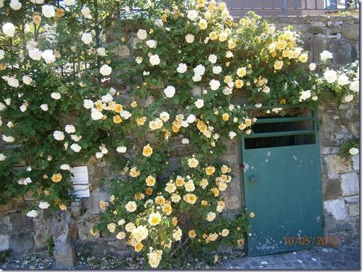 Giardino iris e rose 248