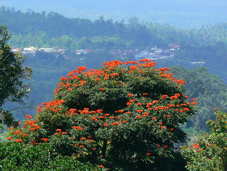 Bali photos: Bedugul landscapes
