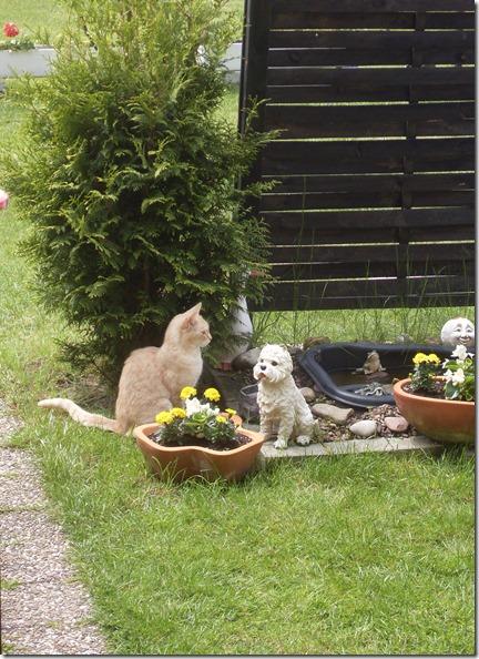 2013_05 Tommy im Garten (1)