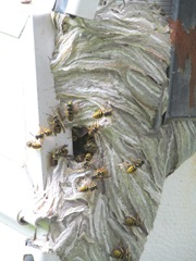 bees with paper nest on camper2
