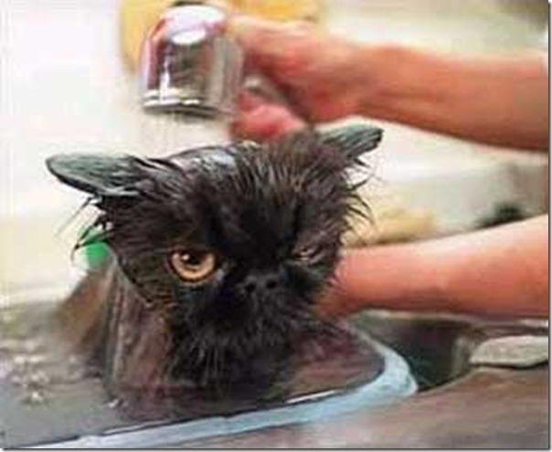 cat-wet-getting-bathed
