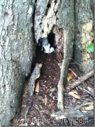Guardian of the GeoCache