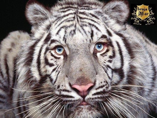 [Animals-ElTallerdelabrujaMar-0700%255B6%255D.jpg]