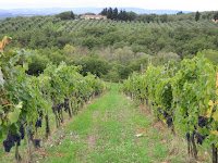 Chianti vines