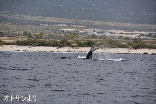 ハワイ島のクジラ