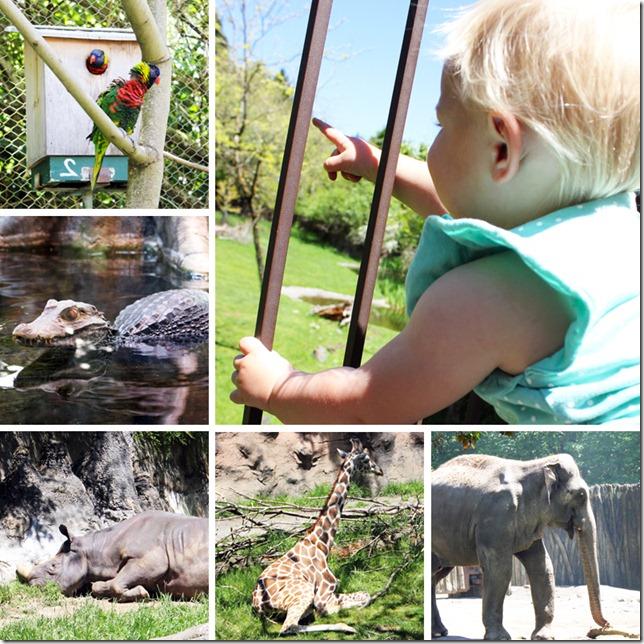 Portland Zoo 1