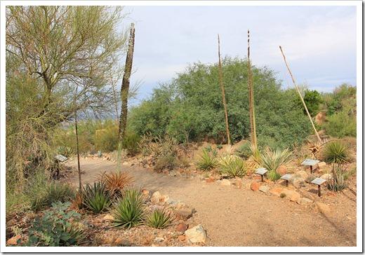 120728_ArizonaSonoraDesertMuseum_080
