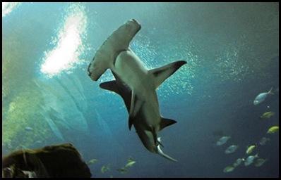 georgia aquarium4