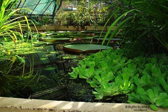 garden_20110914_nackros
