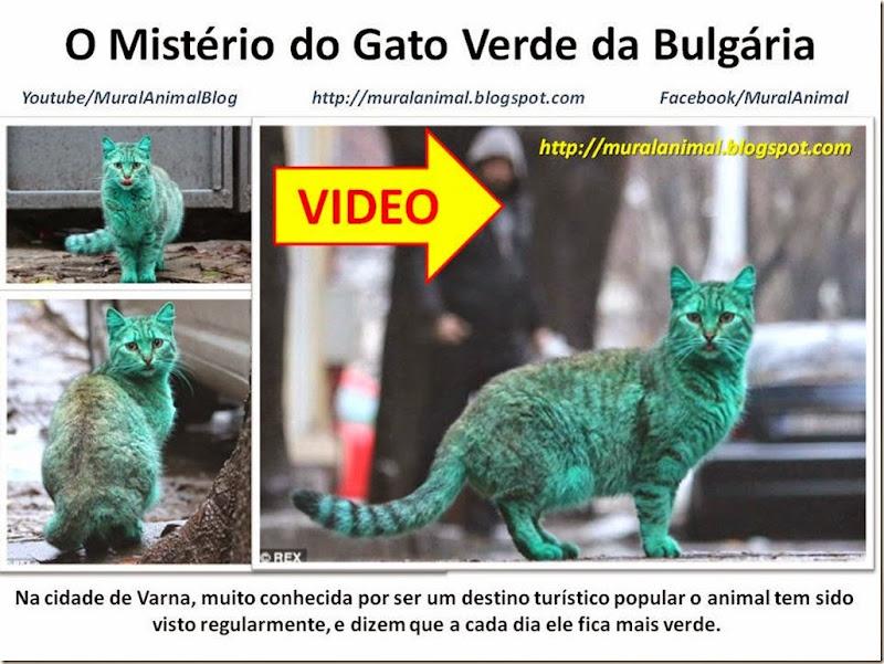 O Mistério do Gato Verde da Bulgária