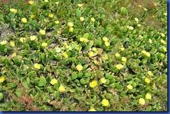 cactus 2011-06-10 001
