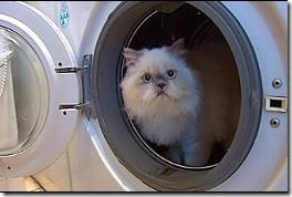 kimba sobrevivio lavadora (2)
