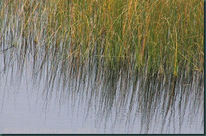 21-reflected-reeds