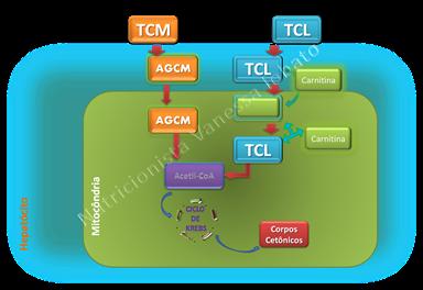 TCM TCL oxidação