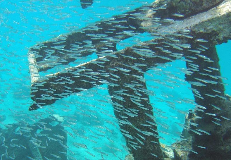 cayman-island-shipwreck-16