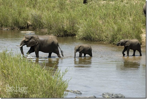cr-3-elephants-in-Olifants