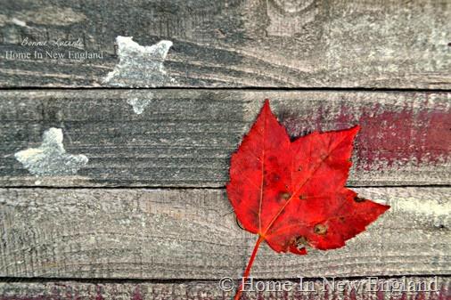 leaf americana