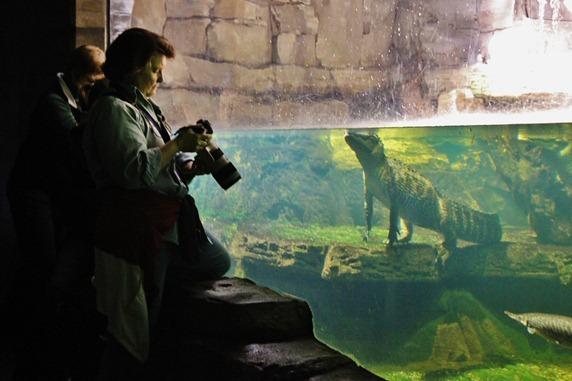 Zoo 144