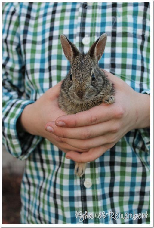 bunnyhands