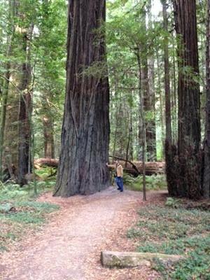 stevenredwoods