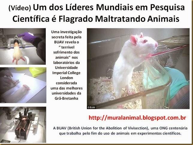 ratos-cobaias