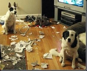 dogs_assholes_35