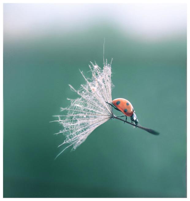 macro-photography-05.jpg