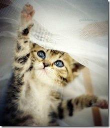 10 -Fotos de gato buscoimagenes (30)