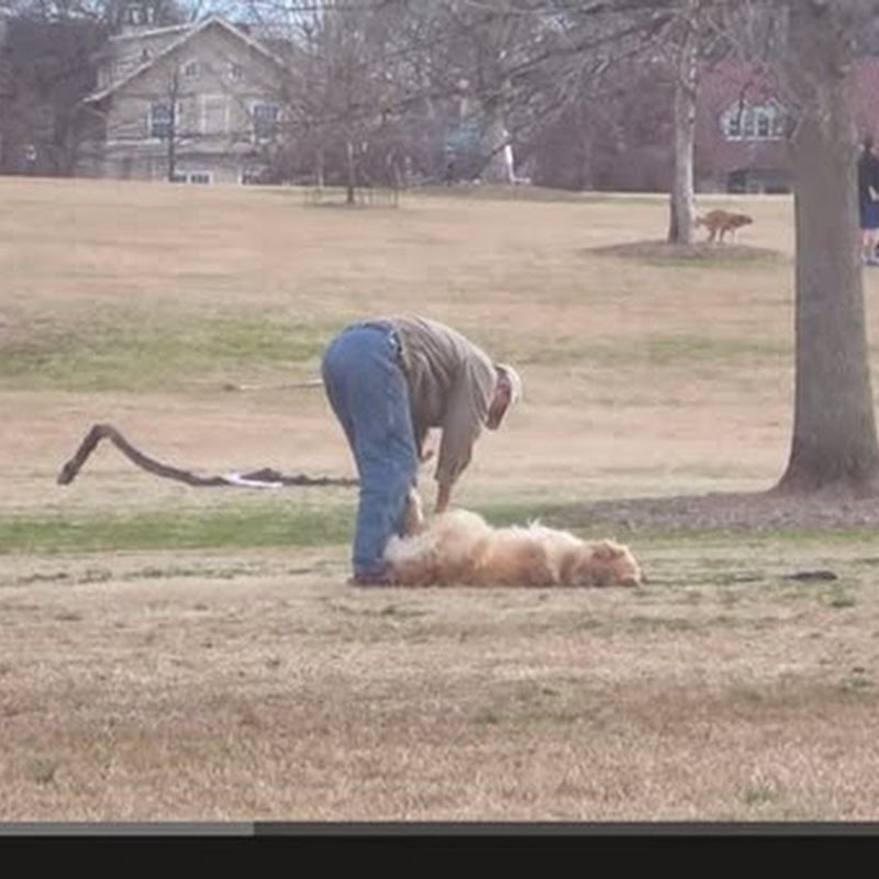 Lazy Dog δεν θέλει να φύγει από το πάρκο