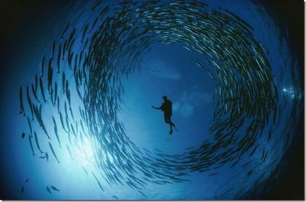 Fotos subaquáticas de David Doubilet (43)