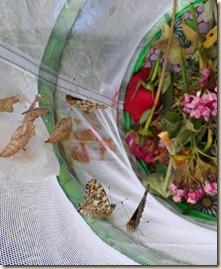 6-19 butterflies 2