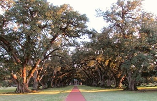 OakAlleyPlantation-1-2014-11-22-10-38.jpg