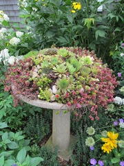 Green Brier Jam kitchen bird bath w succulents2. 8.3.2013