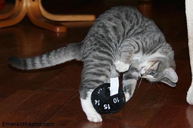 Lekende katt