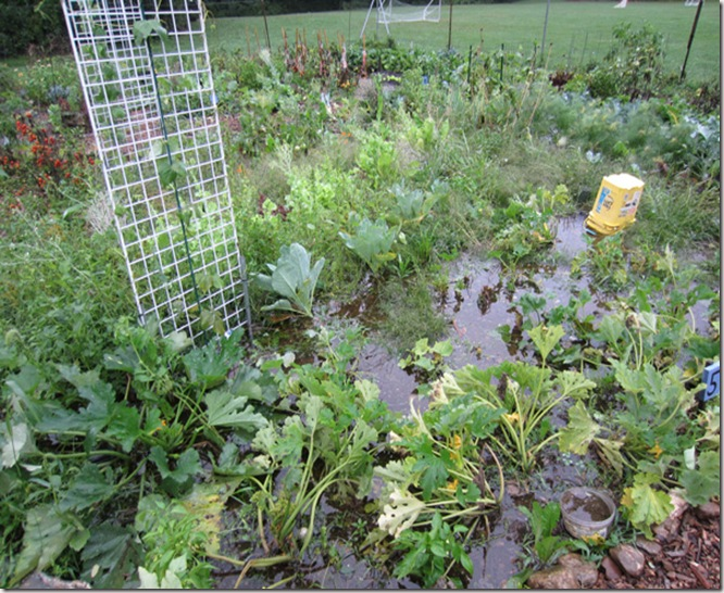 Flooded garden from Irene