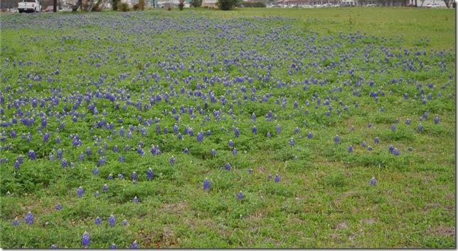 03-14-12 bluebonnets Round Rock 02