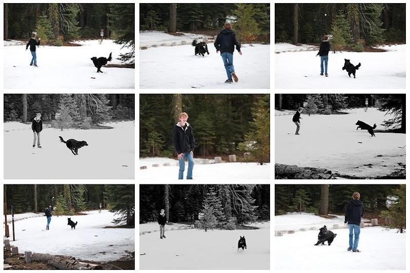 dog dude loves snow